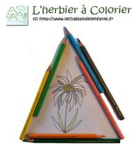 Logo herbier à colorier