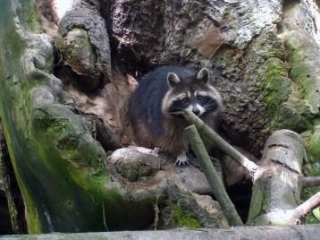 Visite du Zoo